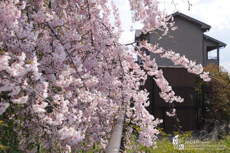 Japan-0704