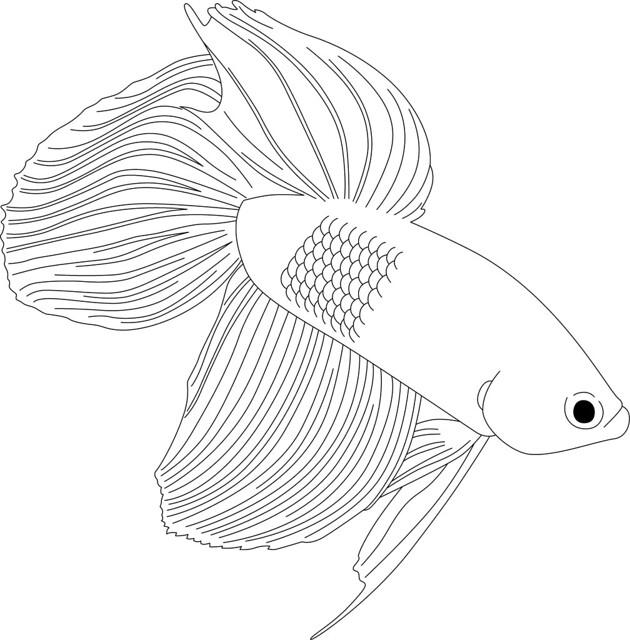 Flickr: Rabblefish