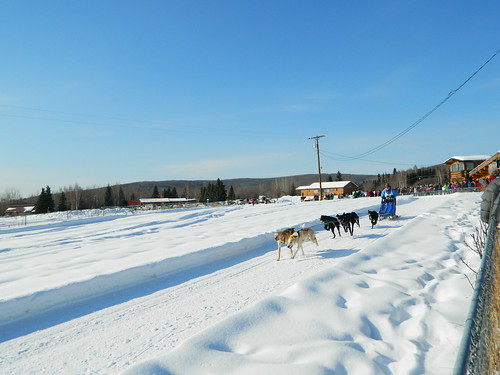 Andrea Swingley (@akswingley) mushing in the Limited North American Sled Dog Race in Fairbanks