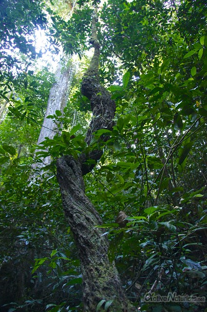 naturist 0018 Palenque, Chiapas, Mexico
