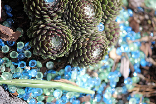 cactus and glass beads, meadowlark botanical gardens