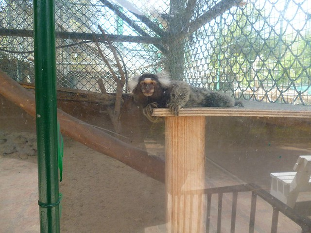Cute monkey is suspicious