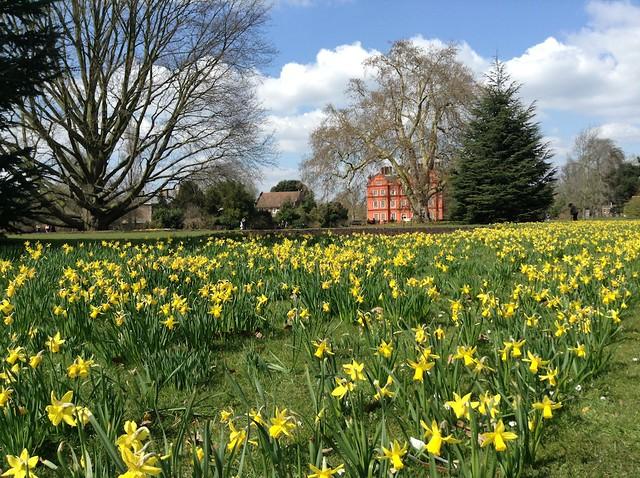 Kew Garden daffodils