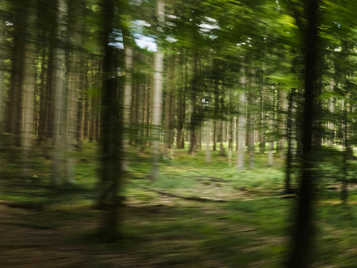 En los bosques de Dinamarca