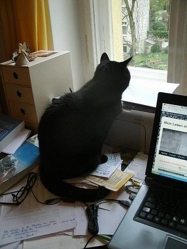 Katze auf Schreibtisch 2