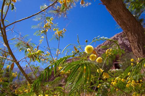 Flores en Purmamarca