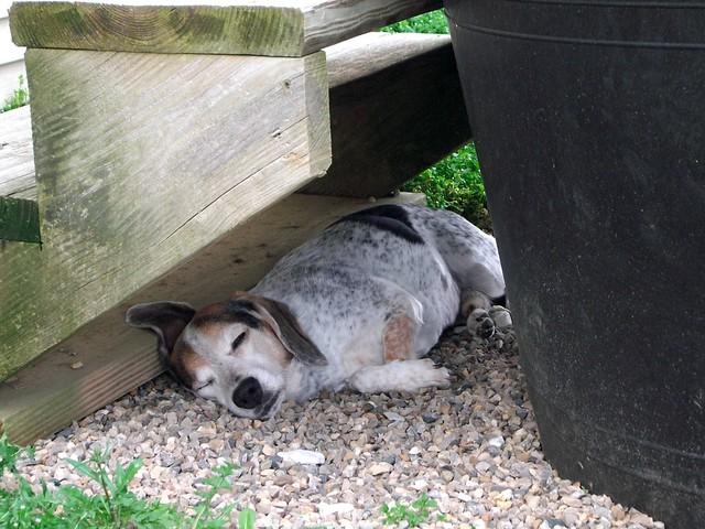Good spot for a nap