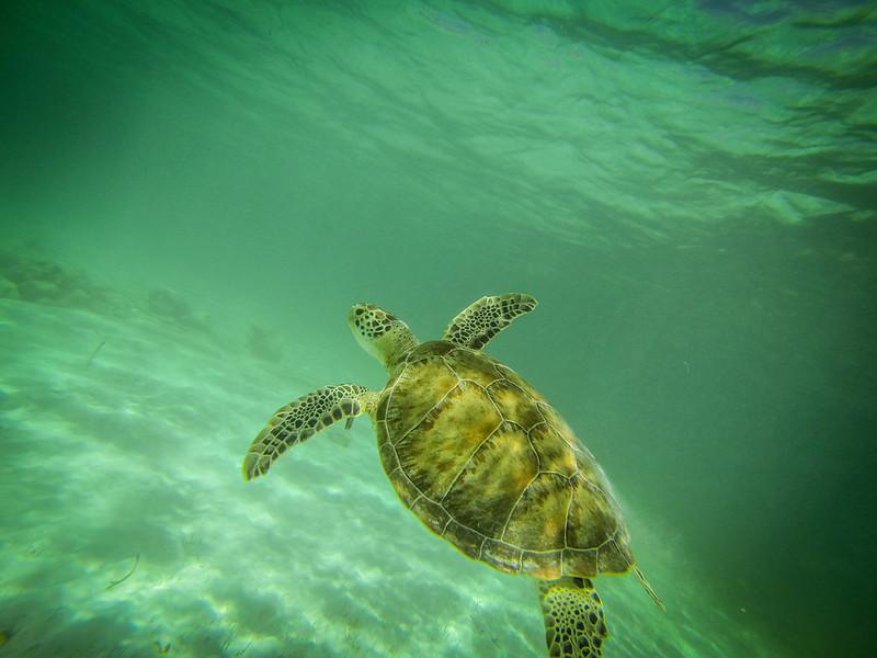 Snorkeling in Akumal-4