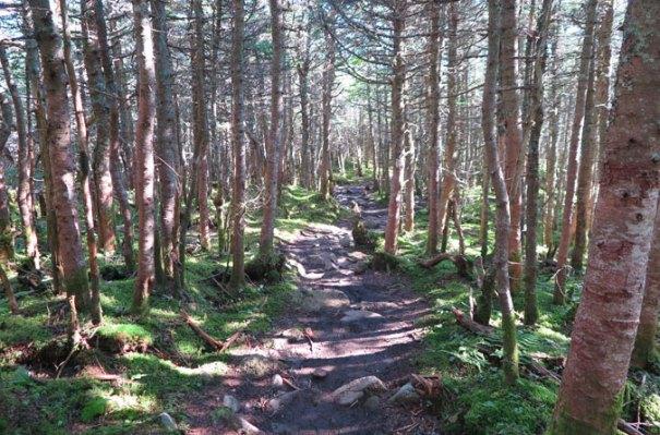 Garfield Ridge Trail