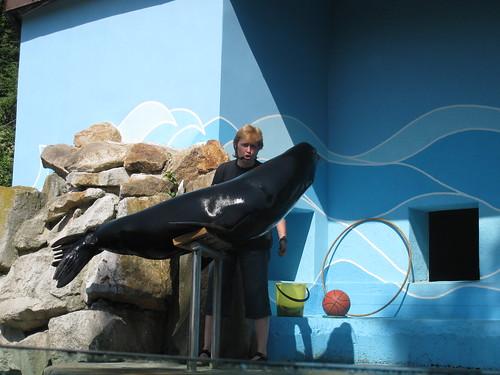 Moritz, the California Sea Lion