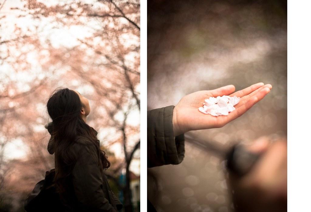 Catch a falling cherry