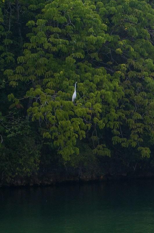 Sailing Rio Dulce-29