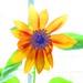 Sunflowers OverExposed