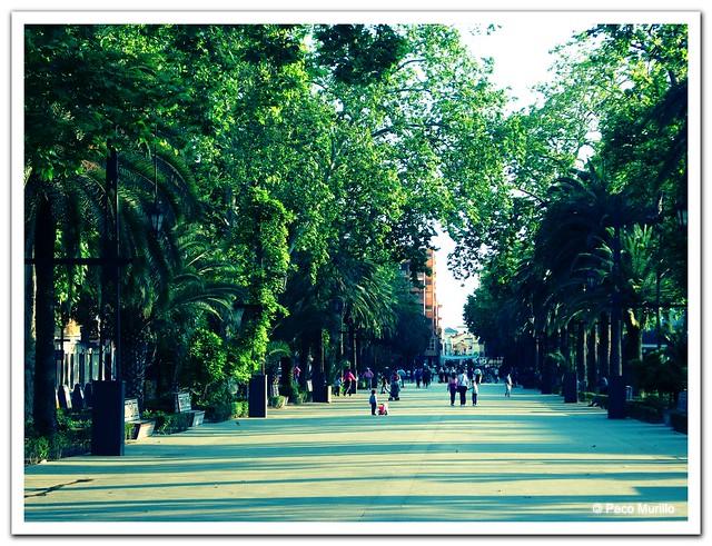 Paseo Linarejos 2