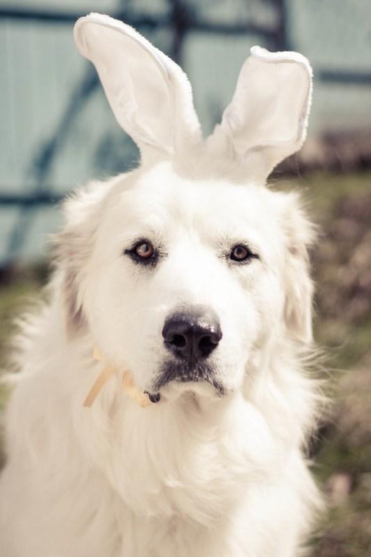 Fionnoula Easter Bunny