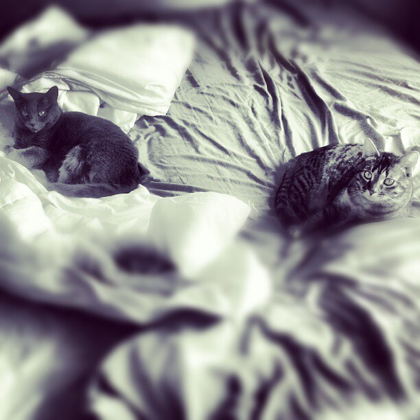 Cats on unmade bed ... Re-edit...