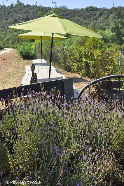lavender_umbrellas_web