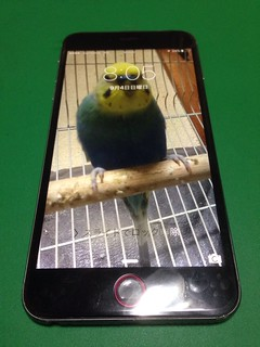 176_iPhone6Plusのフロントパネルガラス割れ