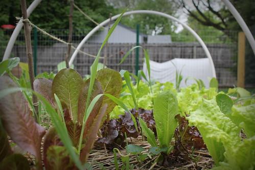 20130504. Salads always.