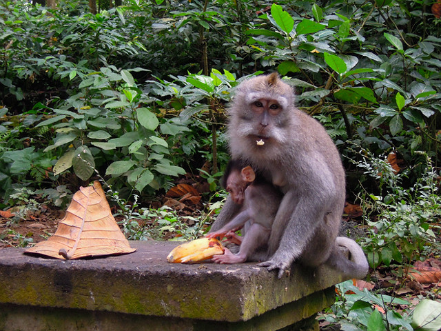 Monkey Forest Sanctuary, Ubud, Bali