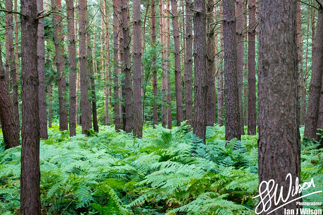 The Woods – Daily Photo (19th August 2012)