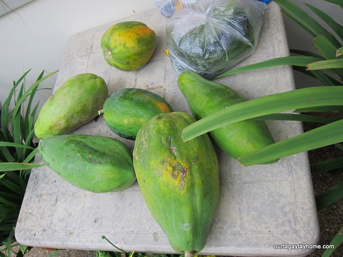 Tagaytay harvest Aug2012 (2)