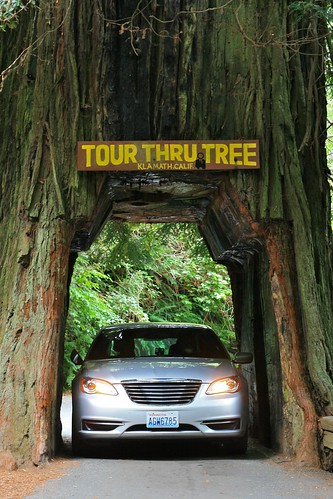 Driving through a tree