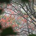 Wli Falls impressions - IMG_1826_CR2_v1