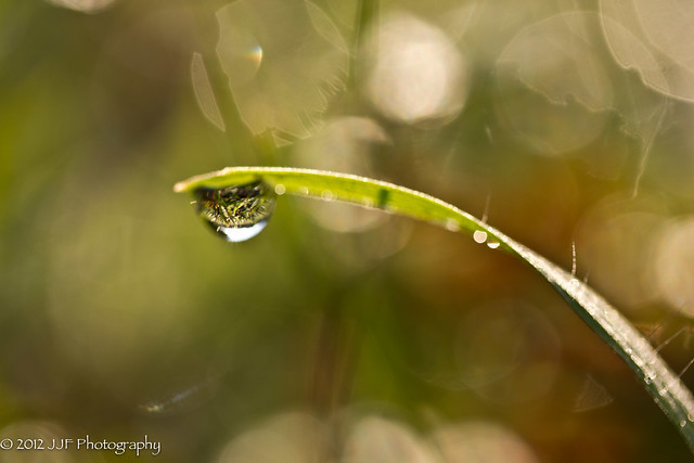 2012_Aug_06_Morning Dew_011