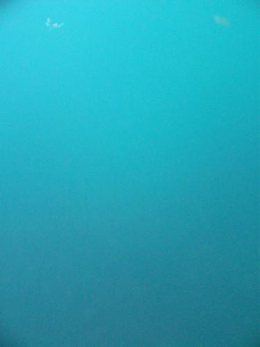 one underwater shot