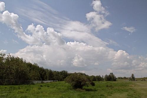 Sky cotton