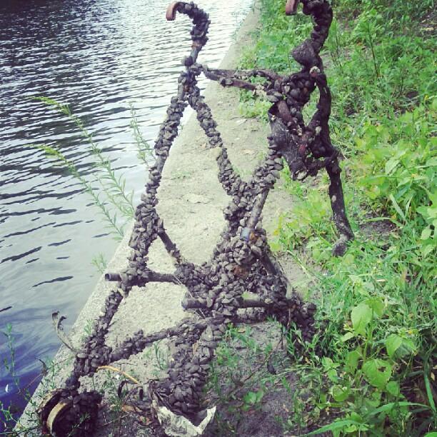 Mussle studded stroller
