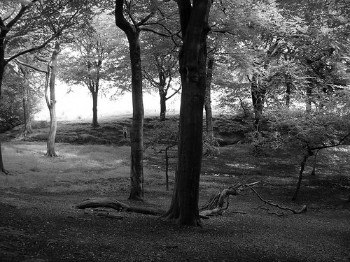 Tandle Hill woodland (black and white)