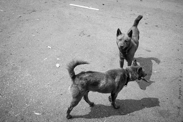 Dogs at the street 5