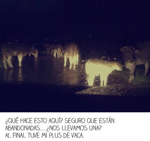 9.vaca