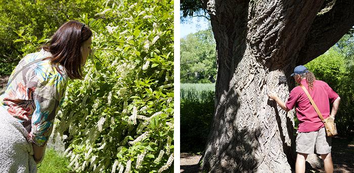 Arnold Arboretum 9