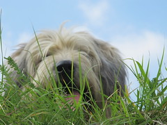 Sniffing herbs