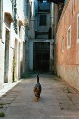 Katze in Venedig