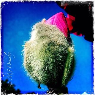 Budding magnolia #iphoneography #imagery #instabud #beauty #instagramhub