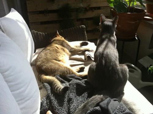 Quintus and Tounsi cohabitating