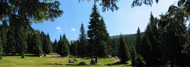 Poiana Pelegii - panoramă