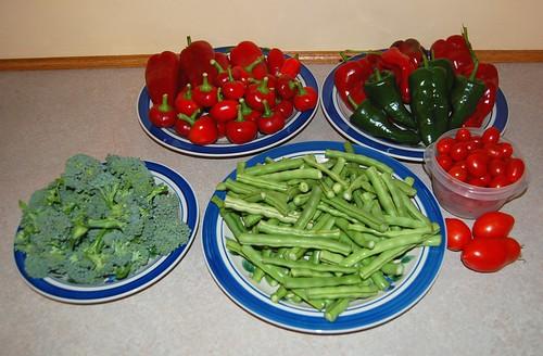 Garden Harvest 091512