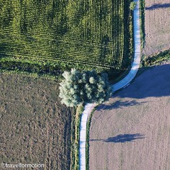 Feel the #curve #road #aerialphotography #flanders #fields #visitflanders #belgium_unite #belgium #igbelgium #vsco #vscocam #wanderlust #travel #travelgram #tree #green