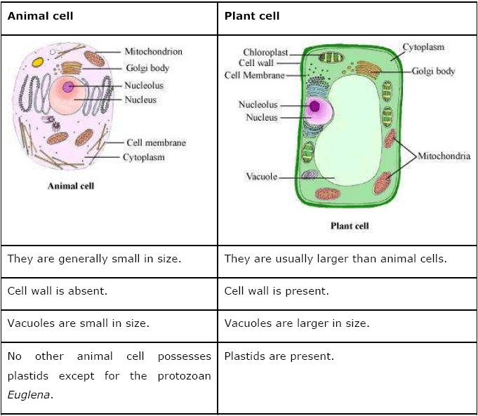 relationship between cell structure and plant parts