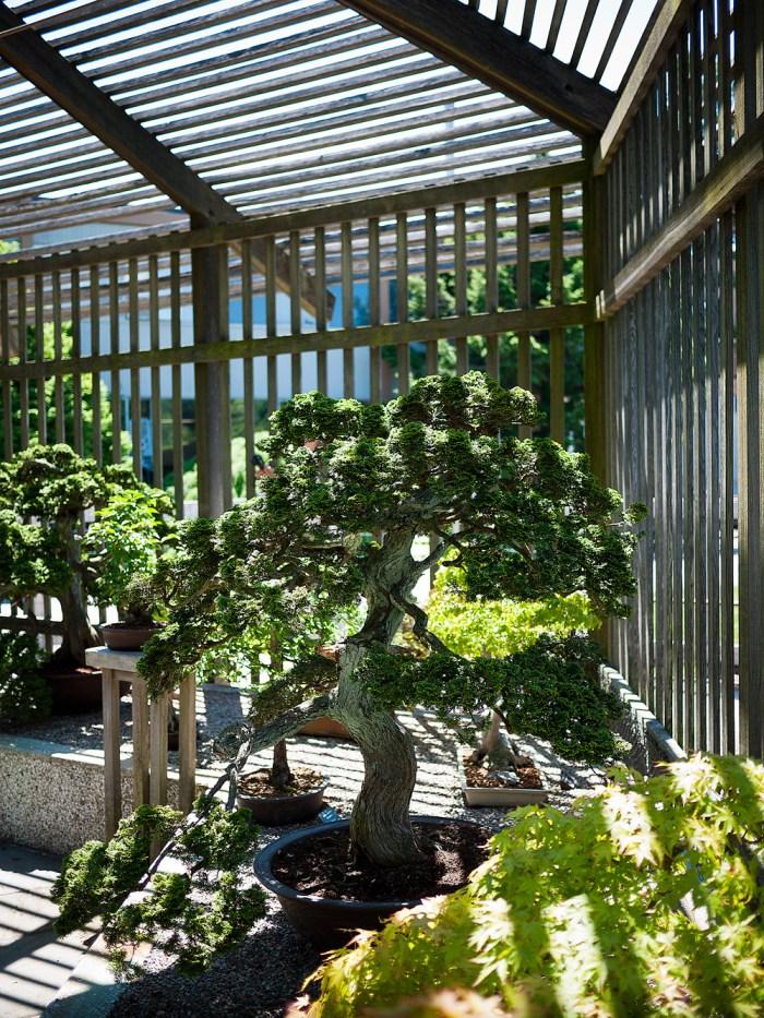 Arnold Arboretum 7
