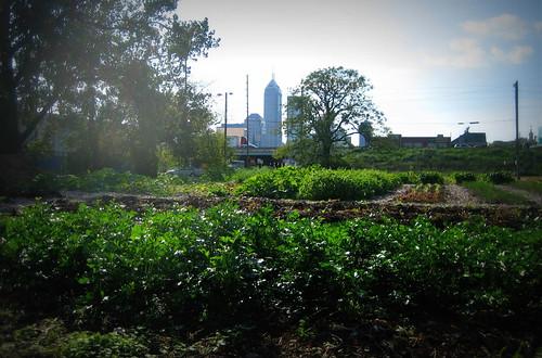20120920. Big City Farms Indianapolis.