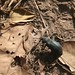 Mole National Park impressions - IMG_1194_CR2_v1