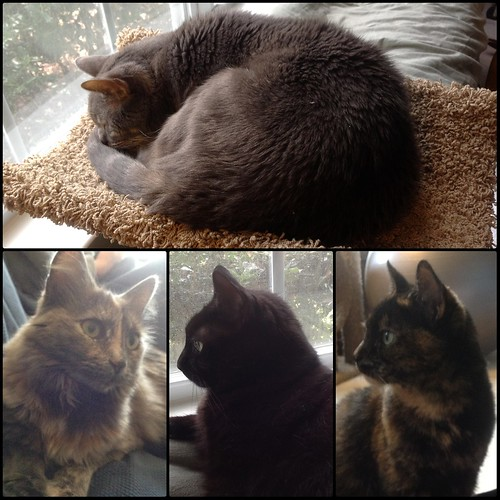 Sunday Catblogging by eteckard
