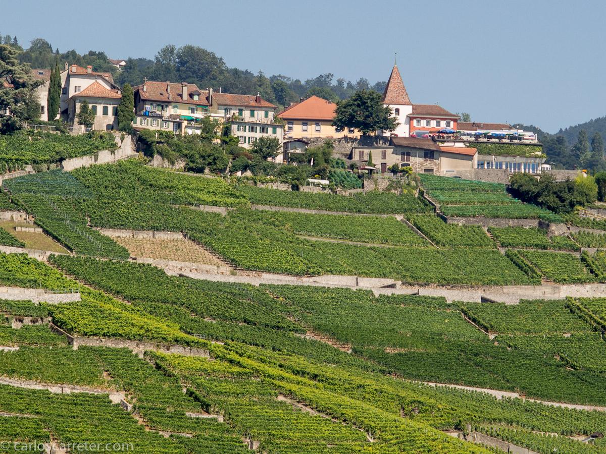 Viñedos de Lavaux