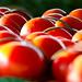 Harvest 2012 008
